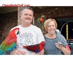 parrot chicks and fertile eggs for sale